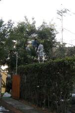 庭木、立木